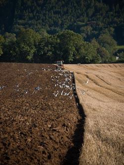 fields-3